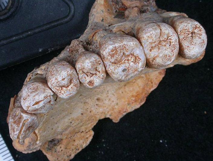 İsrail'deki Misliya mağarasında bulunan ve Afrika dışındaki en eski Homo Sapiens fosili olduğu belirtilen çene ve diş kalıntısı