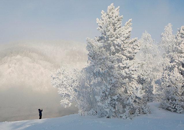 Rusya-kar-orman