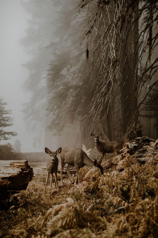 2018 Sony Dünya Fotoğrafçılık Yarışması'nda finale kalan fotoğraflar