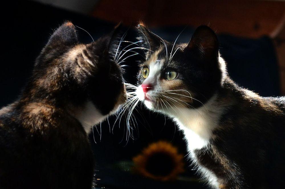 Rusya'da Kediler Günü kutlanıyor