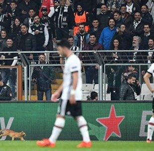Beşiktaş - Bayern Münih maçı - kedi