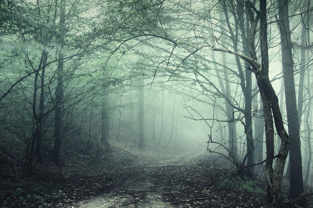 Dünyanın en gizemli ve olağanüstü ormanları