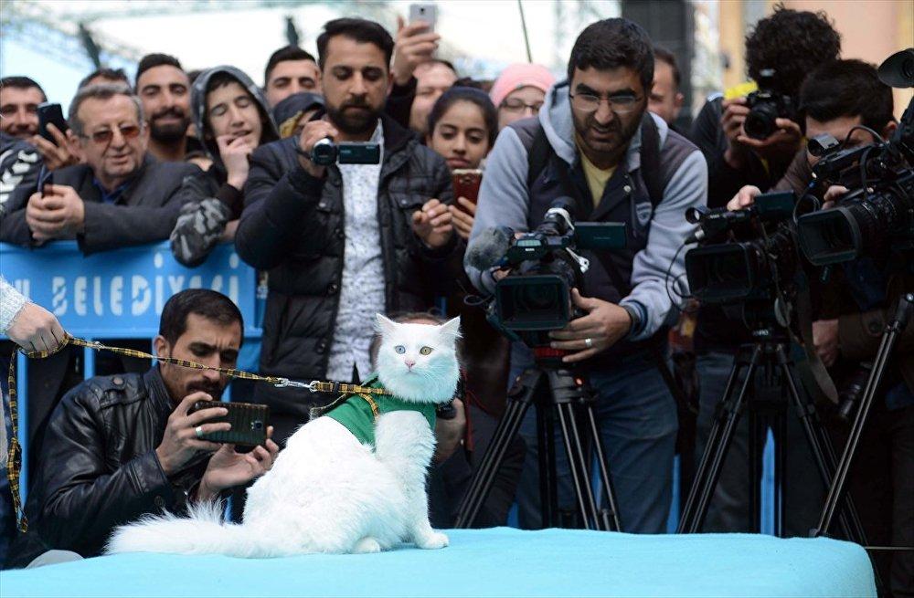 İpekyolu Belediyesi Shopping Fest alanında Büyükşehir Belediyesi desteğiyle düzenlenen yarışmada Van kendileri podyuma çıktı.