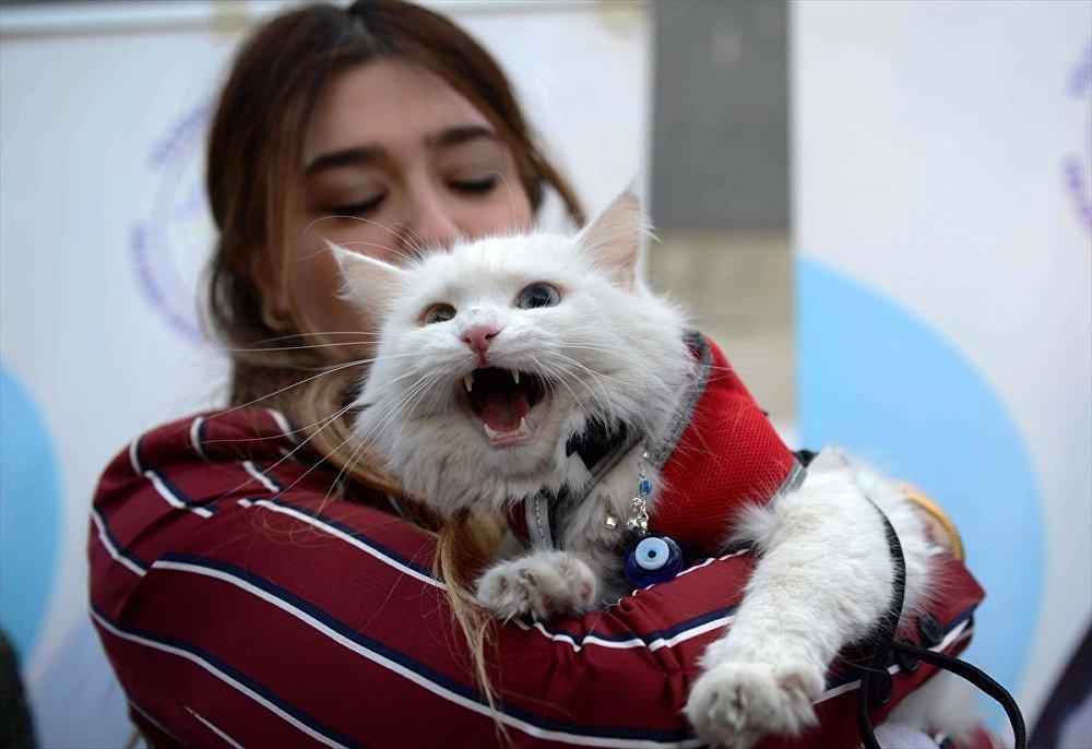 Van'daki yarışmaya kedi severler ve kedi sahipleri büyük ilgi gösterdi.