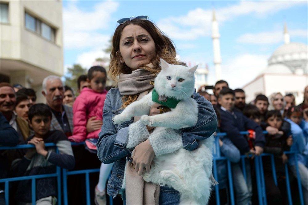 Yapılan oylamada 92 puan alan Sezar isimli kedi birinci seçildi.