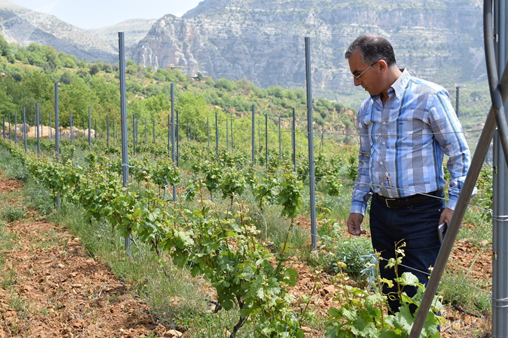 Chateau Wadih şarap imalathanesinin sahibi Piter Abi Unes