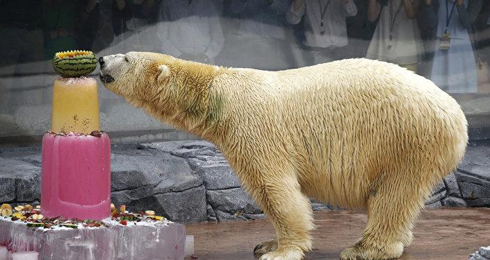 Dünyanın ilk ve tek tropikal bölgede doğan kutup ayısı olan ve adının anlamı 'Sessiz avcı' olan Inuka 27 yaşında hayatını kaybetti.  İnsan yaşına göre 70'lerinde hayatını kaybeden Inuka vahşi hayattaki türdeşlerinin normal yaşam süresinden yaklaşık 10 yıl, esaret altındaki türdeşlerinden ise 2 yıl daha fazla yaşadı.