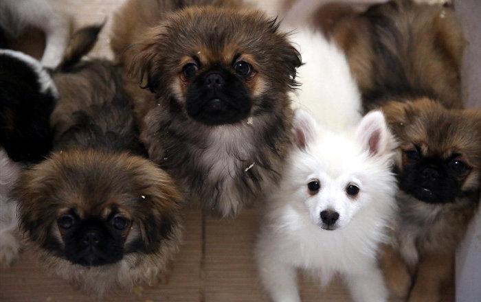 Köpekler insan dilini belirli ölçüde anlayabiliyor
