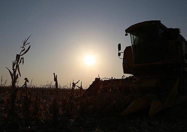 Tarla, işçi, tarım