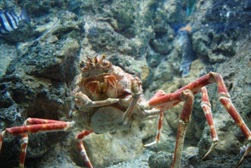 Okyanusta yaşayan en büyük canlılar