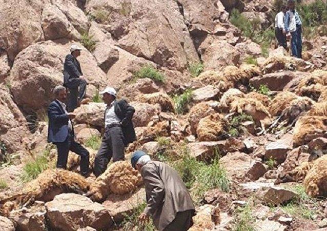 Van'da 500 koyun intihar etti