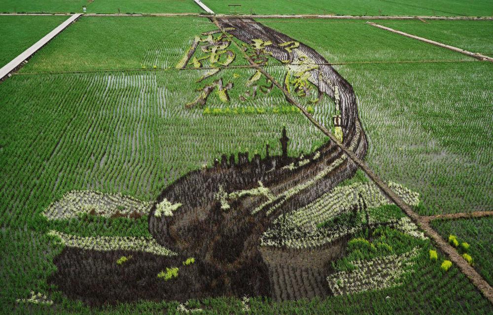 Çin'deki pirinç tarlalarında sanat eserleri