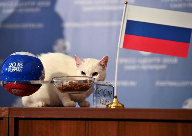 Kahin kedi Aşil, Rusya mama kabını Suudi mama kabına tercih ederek açılış maçında doğru tahminde bulunmuştu.