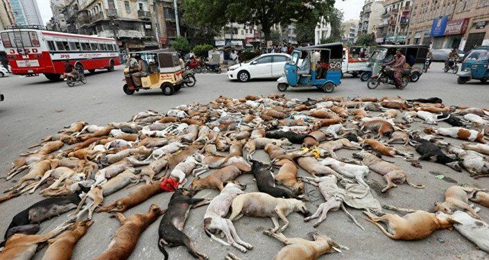 Dünya Kupası öncesinde Rusya'da 'öldürülen' köpeklerin yer aldığı fotoğraf sahte çıktı