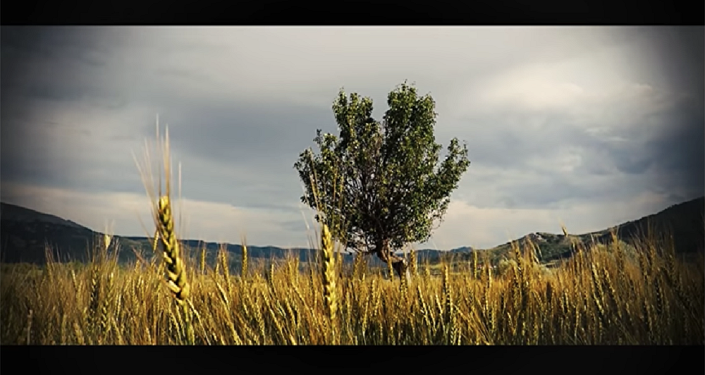 Saadet Ağacı, Ahlat Ağacı gönderme