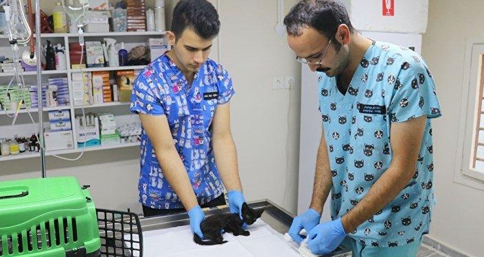 Yalova'da iki yavru kedi, ayakları kesilmiş halde bulundu