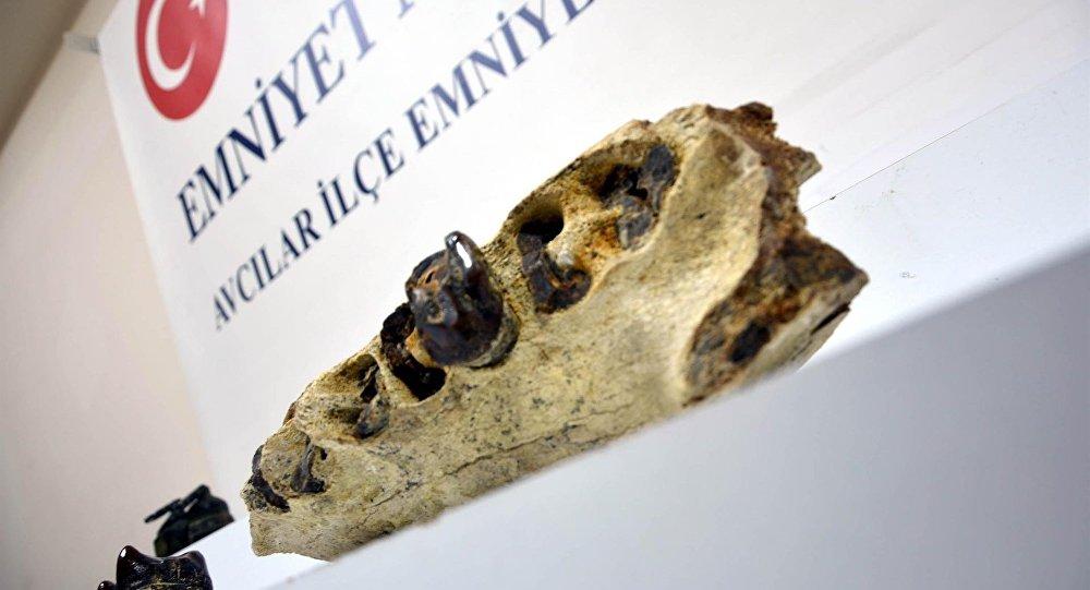 Evden 7 milyon yıllık dinozor çenesi çıktı