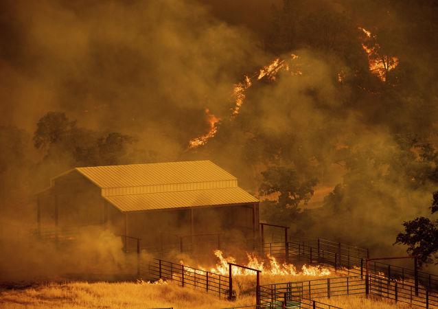 Kaliforniya'da orman yangınları