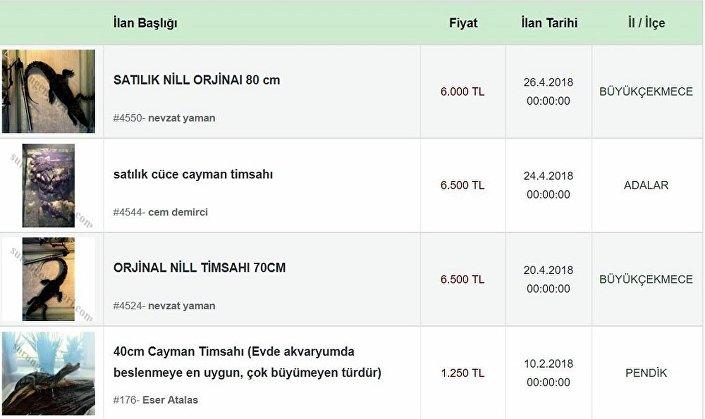 Timsahlar, 1250 lira ile 6 bin lira arasında değişen fiyatlarla satışa çıkartılıyor.