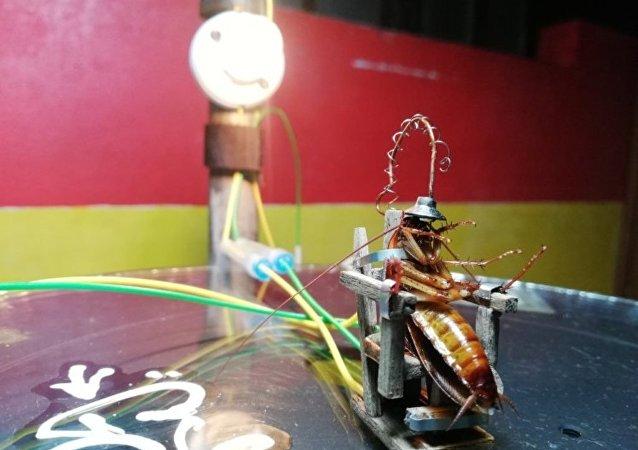 Evine giren hamam böceğini idam etmek için Filipinli heykeltıraş tarafından yapılan elektrikli sandalye