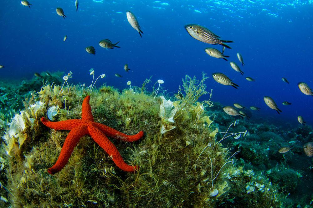 Aeolian Adaları'nın rengarenk sualtı dünyası