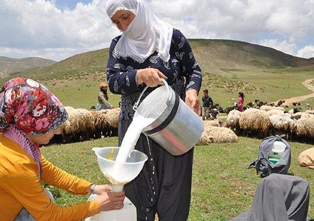Süt, hayvancılık