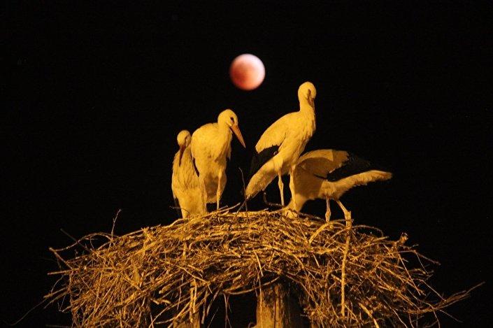 Kanlı Ay tutulması Sivas'ın Hafik ilçesinde böyle izlendi.