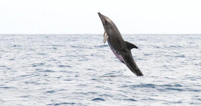 Yarısı yunus diğer yarısı balina