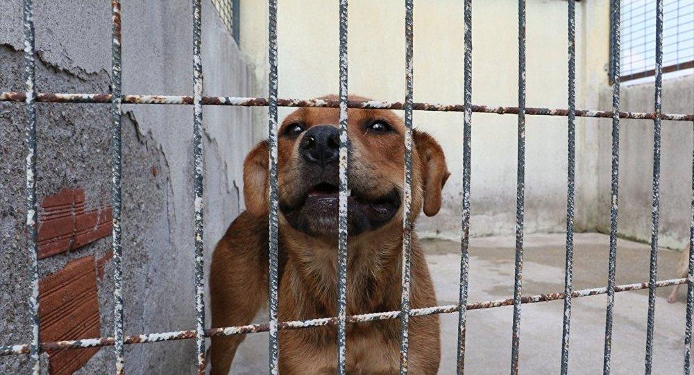 Hayvanlara işkence edene hapis cezası geliyor