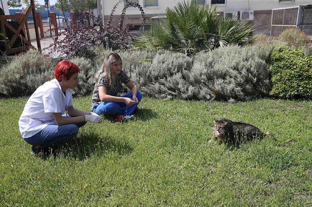 Obez kedi 'Taci' diyete başlatıldı