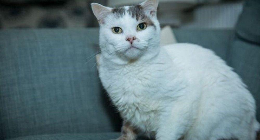 Kan pıhtılaşması hastasının hayatını kedisi kurtardı