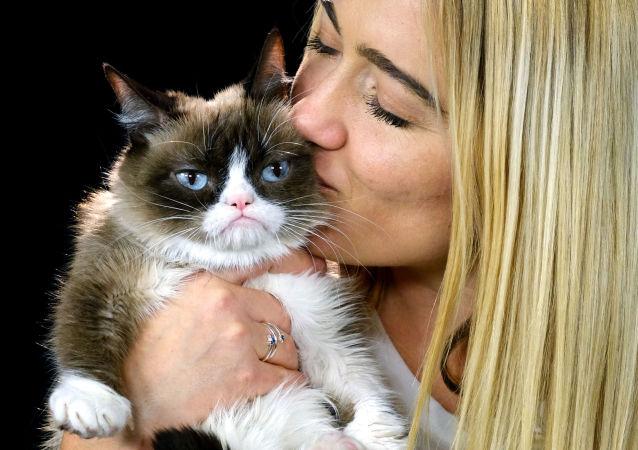 Dünyanın en ünlü kedileri