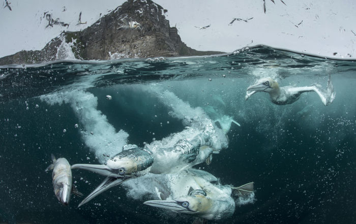 2018'in En İyi Kuş Fotoğrafçısı Yarışması'nın kazananları belli oldu