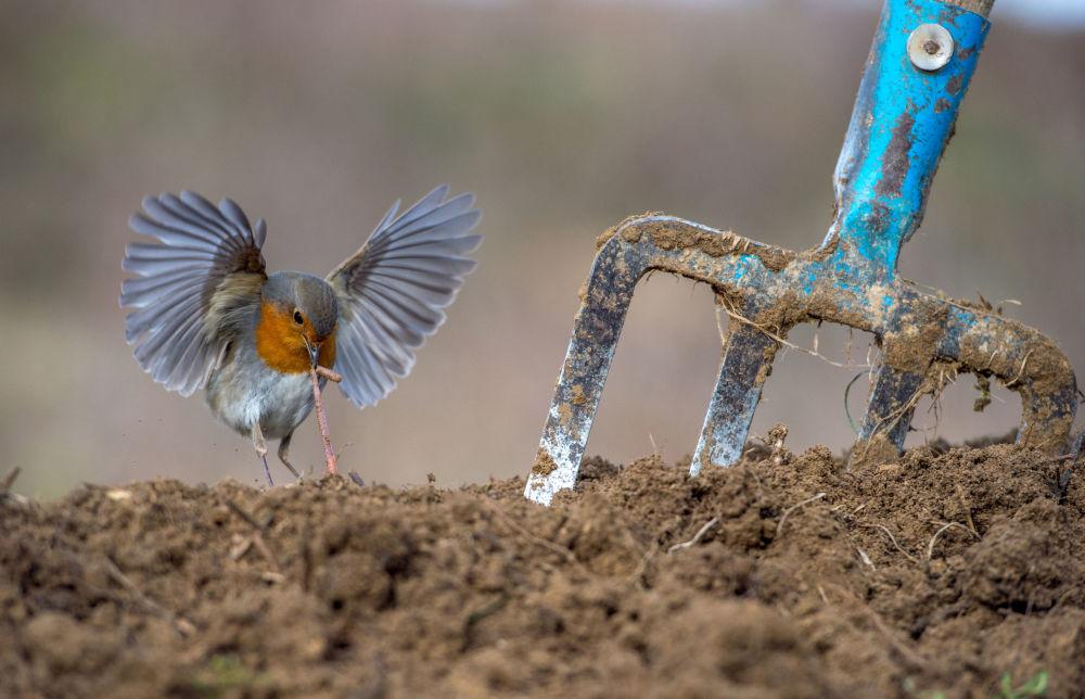 2018 Yılının En İyi Kuş Fotoğrafçısı Yarışması'nın kazananları