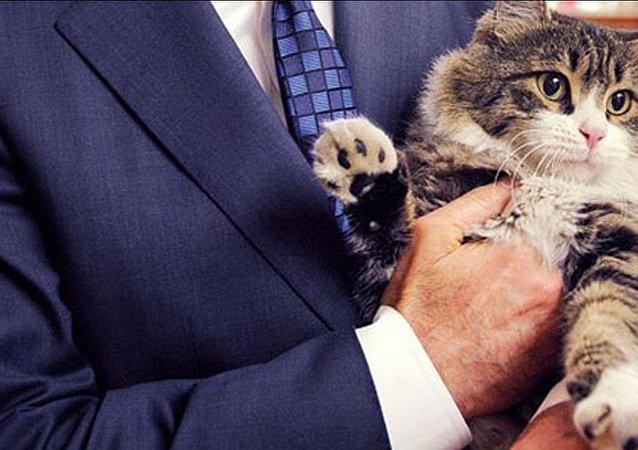 CHP, kedi, Şero