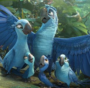 Brezilya'ya özgü soyu tükenen parlak mavi makav türünü 'Rio' çizgi filmi tüm dünyaya sevdirmişti.
