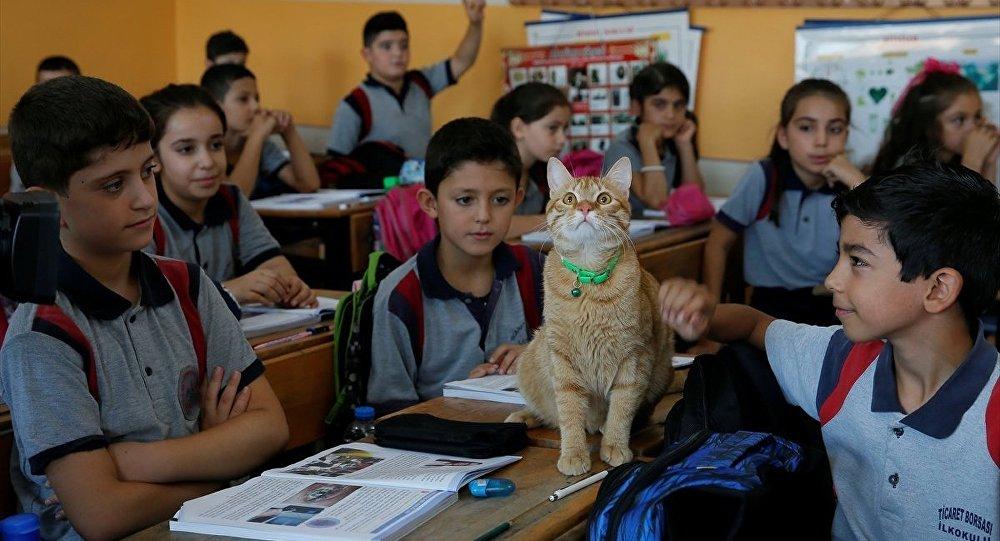 Kedi Tombi