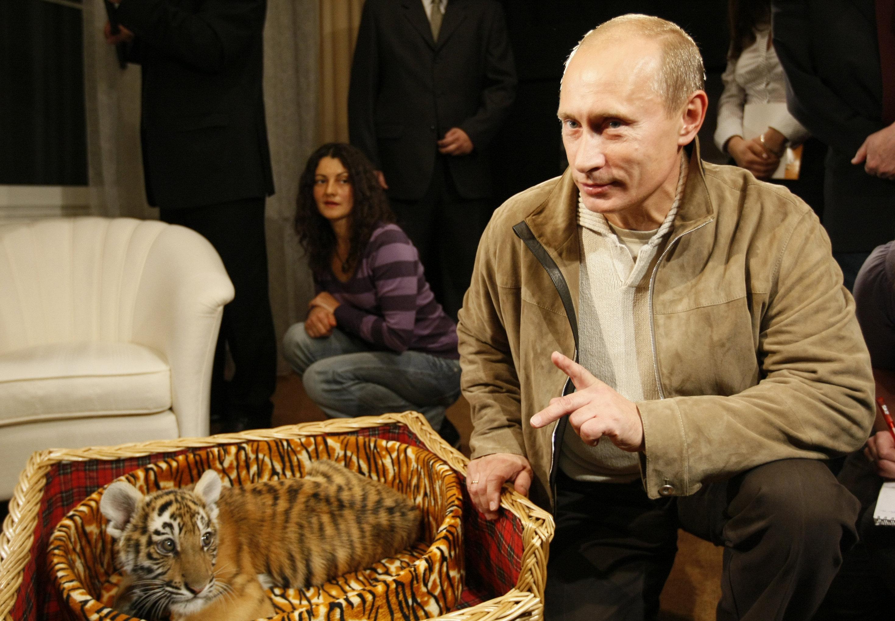 Rusya Devlet Başkanı Vladimir Putin, 2008'de 56. yaş gününde armağan edilen Sibirya kaplanını basın mensuplarına tanıtırken.