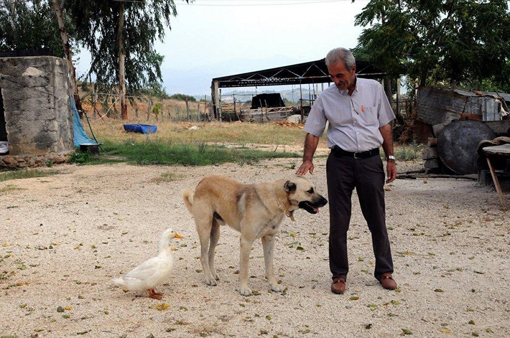 Ördek ile köpeğin şaşırtan dostluğu
