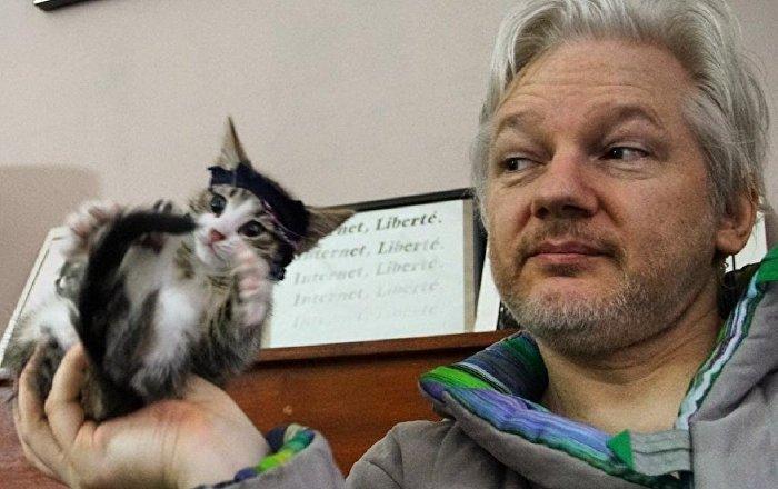 Ekvador'dan Assange'a ültimatom: Kedinin bakımını yerine getirmezsen, el koyacağız