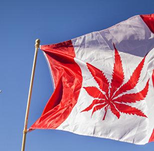 Kanada'da neredeyse 100 yıllık marihuana yasağı geceyarısı itibarıyla sona erdi. Uruguay'ın ardından eğlence amaçlı marihuana tüketimini ve satışını yasallaştıran ikinci ülke olan Kanada, artık bu düzenlemeyi yapan ilk Batı ülkesi ve en büyük yasal marihuana pazarı konumunda. 2015'teki seçim kampanyasında söz konusu düzenlemeyi hayata geçirme vaadinde bulunan ve bu sözünü yerine getiren Kanada Başbakanı Justin Trudeau yasanın yürülüğe girmesinden önce yaptığı açıklamada Marihuanayı sağlığımız için iyi olduğu gerekçesiyle yasallaştırmıyoruz. Bunu yapıyoruz çünkü marihuananın çocuklarımız için iyi olmadığını biliyoruz. Çocuklarımızı korumak ve organize suç örgütlerinin elde ettiği karları yok etmek ya da önemli ölçüde azaltmak için daha iyi iş çıkarmamız gerektiğini biliyoruz dedi.