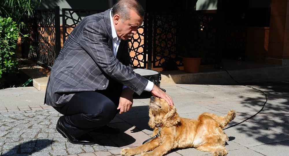 Recep Tayyip Erdoğan - köpek - Çiko
