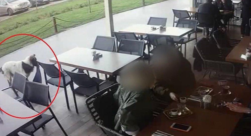 AVM'de tişört, şal ve triko çalan köpek güvenlik kameralarına yakalandı