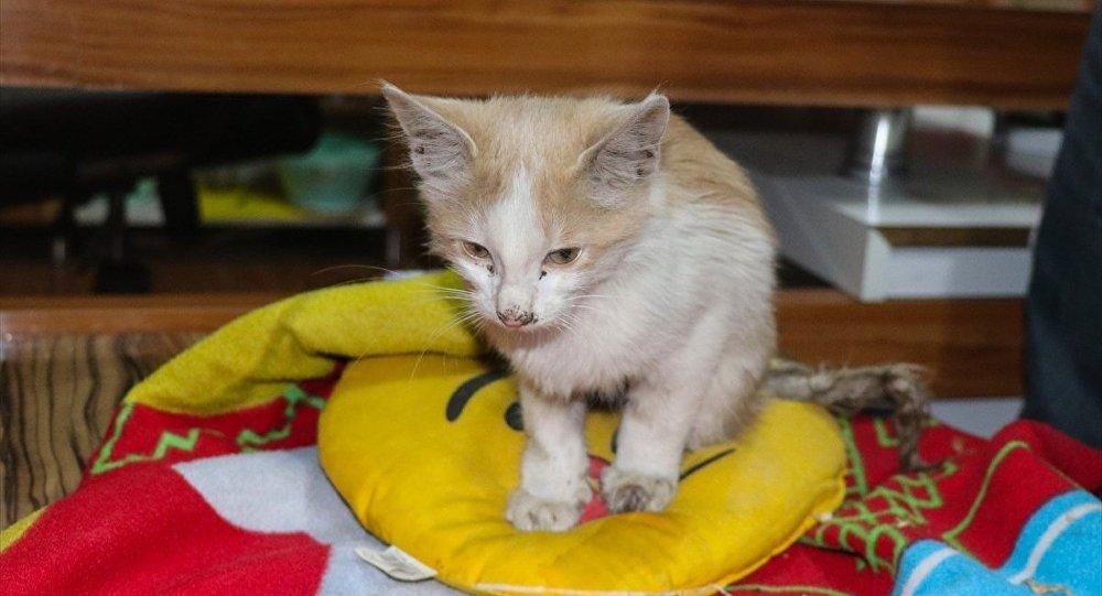 Iğdır'da bir esnaf tarafından ayakları kesik halde bulunan yavru kedi