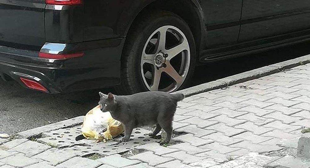 Sultangazi'de kuyruğu kesilmiş bir kedi