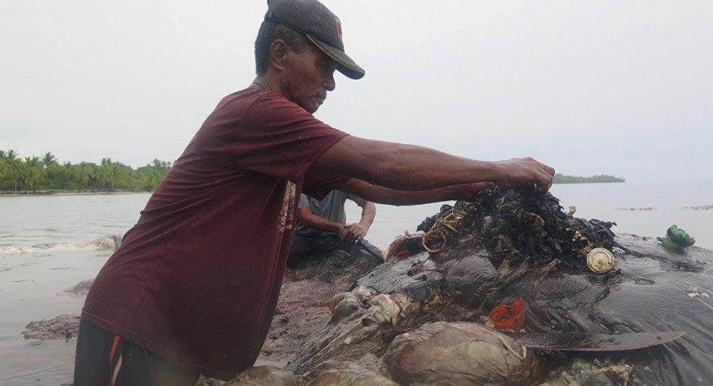 Ölü balinanın midesinden 6 kilo çöp çıktı - endonezya