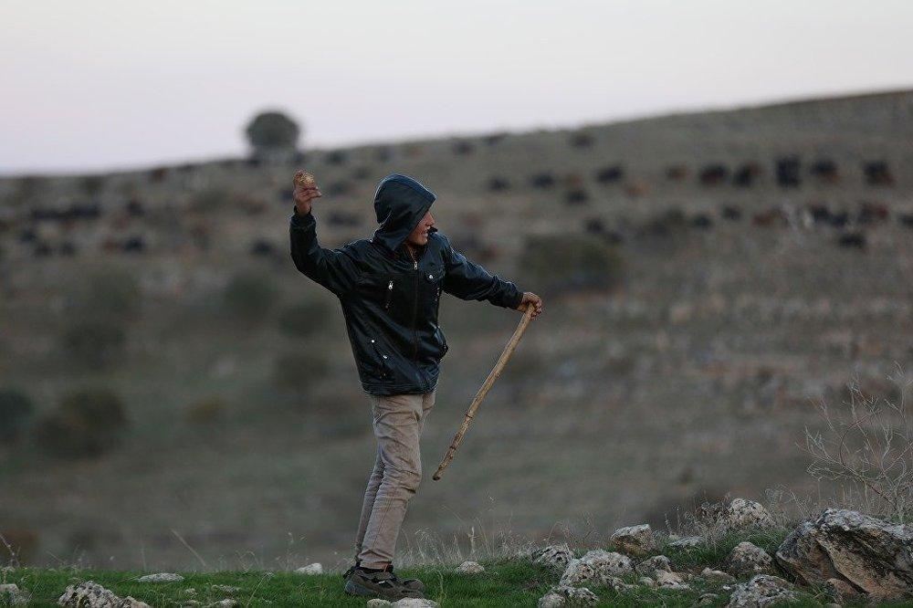Koca bir sürüye bakan 13'ünde bir çoban: Hayalim yok 2