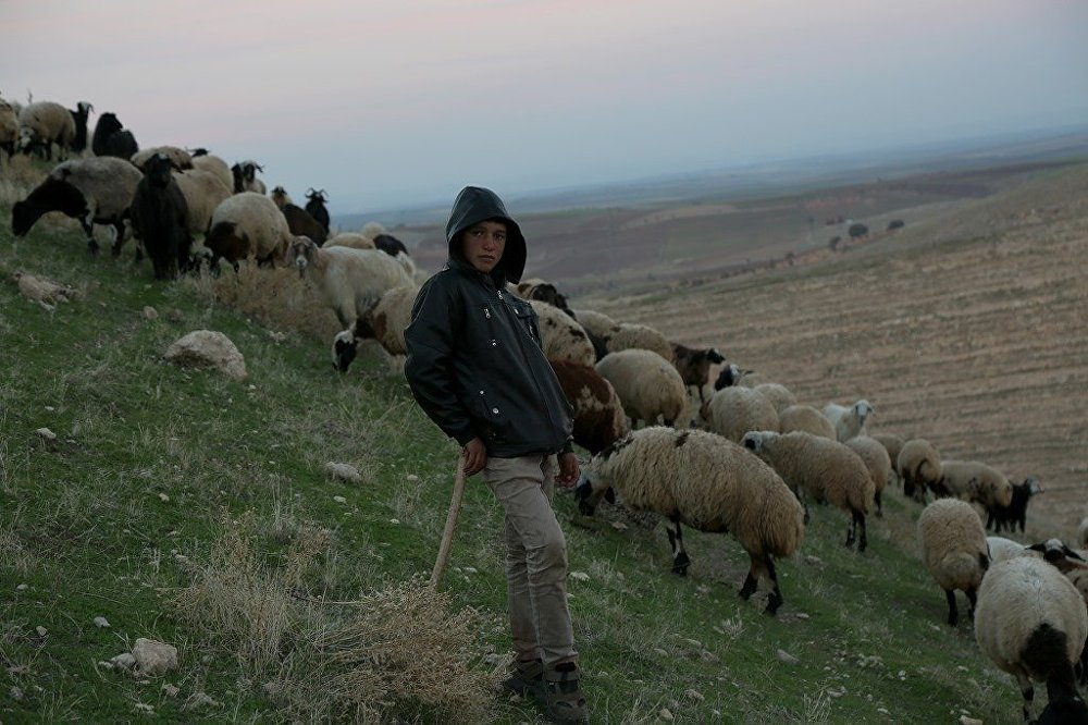Koca bir sürüye bakan 13'ünde bir çoban: Hayalim yok 45