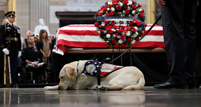ABD Kongresi'nin Capitol Hill binasının Rotunda bölümünde ziyaret edilen 41. Başkan George H.W. Bush'un naaşını rehber köpeği Sully son kez selamlamaya geldi.