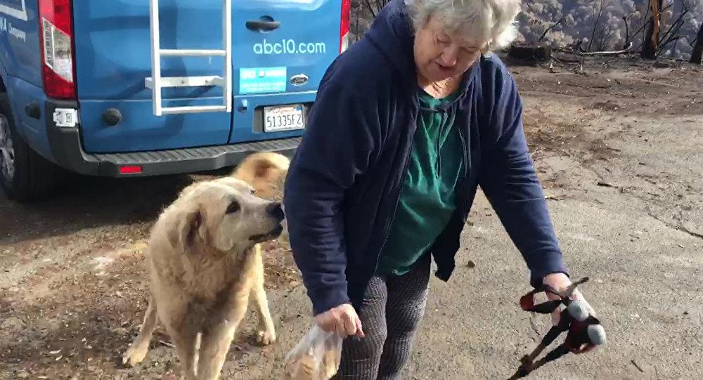 ABD'de bir köpek, kül olmuş evin önünde 1 ay sahiplerini bekledi